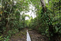 a clear path by jessizxz