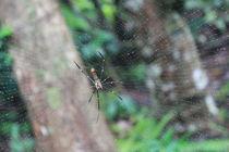 Spider  von jessizxz