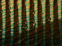 Vertical Lines by Robert Ball