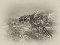 Sea-turtle0061