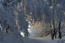 Weg durch den Winterwald von Wolfgang Dufner