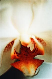 Orchid by Razvan Anghelescu