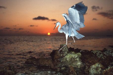 Airone-maldives