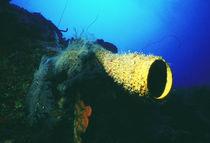 Tube Sponge von martino motti