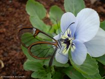 Beautiful butterfly by Florentina Necunoscutu de Carvalho
