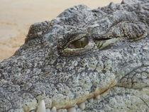 Krokodil im Kölner Zoo by Kathrin Kiss-Elder