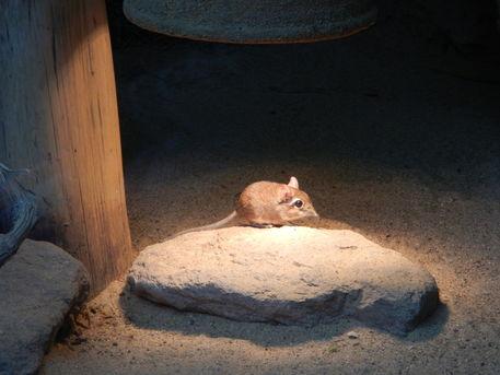 Zoo-12-11-59