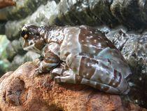 Frosch im Kölner Zoo by Kathrin Kiss-Elder