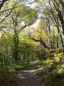 Forest Trail von Rebecca Ledford