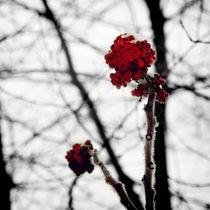 Red by Geneviève Khayat
