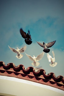 "Take off (Or ""Flight of the pigeons"") by George Panayiotou"