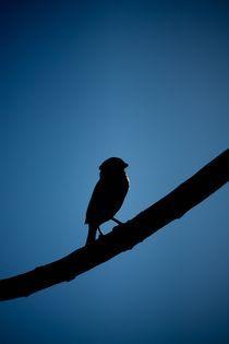 Proud birdey. von George Panayiotou