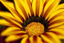 Flower von Deyan Sedlarski