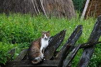 Cat on Fence von Dejan Knezevic