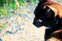 Black cat by Geneviève Khayat
