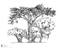 San Francisco Tree Trio #1 von Thomas Duane