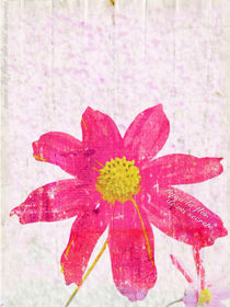 Toma la flor de mi secreto by Ale Di Gangi