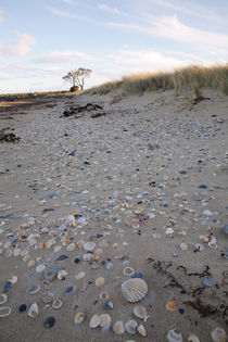 Shell strewn beach von Mark Lucock