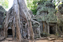 Tree Roots Engulfing Ancient Ruins of Ta Prohm von Mark Lucock