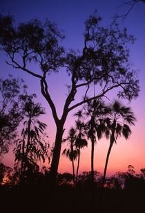 Silhouette of trees at sunset von Mark Lucock