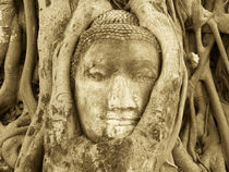 Stone Buddha being strangled by tree roots von Mark Lucock