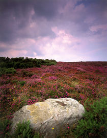 Heather Moorland with boulder in foreground by Mark Lucock