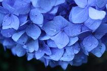 Flowers by Danielle Ebron