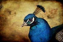 Blauer Pfau by AD DESIGN Photo + PhotoArt