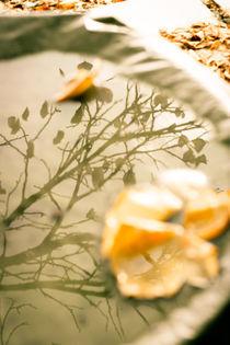 Autumn reflection von George Panayiotou