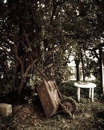 old wheelbarrow in a garden von George Panayiotou