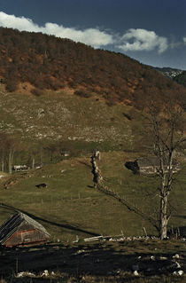 Countryside 6 by Razvan Anghelescu