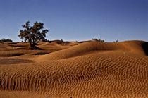 Desert 2 by Razvan Anghelescu
