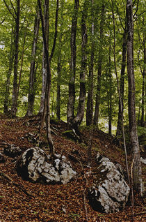 Forrest by Razvan Anghelescu