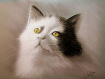 Kater by Renate Dohr