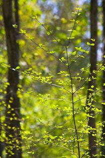 Frühlingswald von stelda