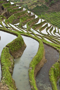 Flooded rice terraces by Danita Delimont