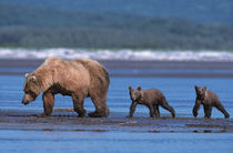 Katmai National Park by Danita Delimont