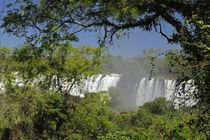 Iguacu Falls in sun by Danita Delimont