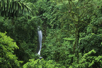 Rainforest private reserve von Danita Delimont
