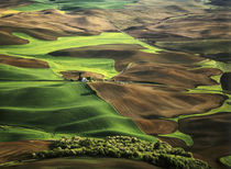 View of Palouse farm country cultivation patterns by Danita Delimont