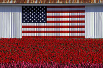Flag painted on barn and tulip field by Danita Delimont
