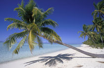 Tetiaroa French Polynesia von Danita Delimont
