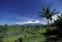 Mount Agung von Danita Delimont