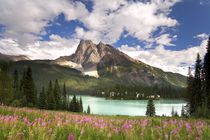View of Emerald Lake and surrounding wilderness by Danita Delimont