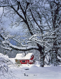 Fresh snow covers landscape and red barn von Danita Delimont