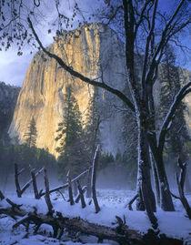 Sierra Nevada von Danita Delimont