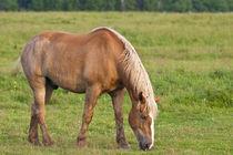 Horse in field von Danita Delimont