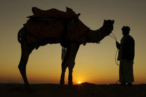 A man and his camel Silhouetted at sunset on the sand dunes in Jalsamer India by Danita Delimont