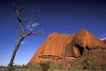 Uluru (Ayers Rock) by Danita Delimont