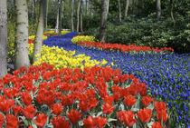 Keukenhof Gardens von Danita Delimont